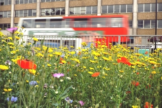Bus going past an urban wildflower meadow