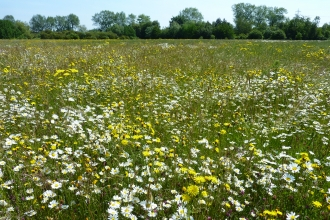 Wonderful wildflower meadow at Castle Vale, Birmingham