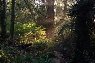 Moseley Bog in the early morning light