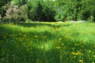 new wildflower meadow at Peascroft Wood