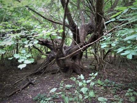 Improving woodlands at Canon Hill Park