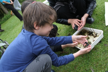 Child holding a smooth newt at EcoPark