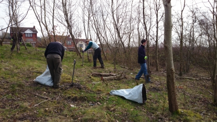 Working with community groups to plant trees