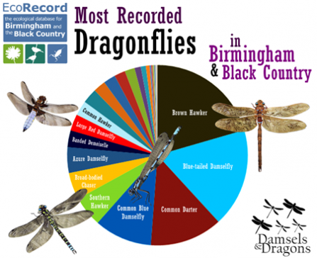 Chart of Damselfly & Dragonfly spottings
