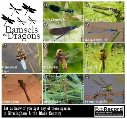 Damsels & Dragons ID and Spotter Guide