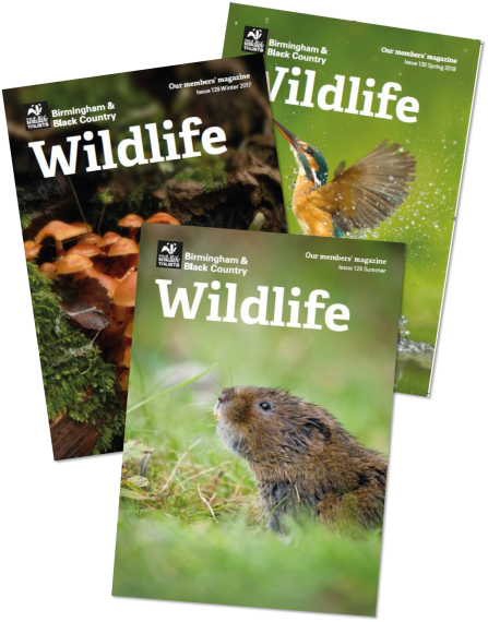 Local 'Wildlife' Magazine
