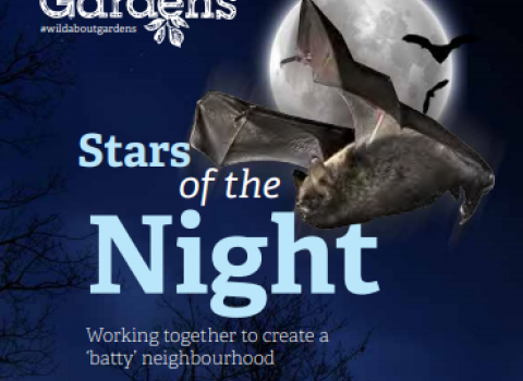 Stars of the Night, Bat Pack Cover