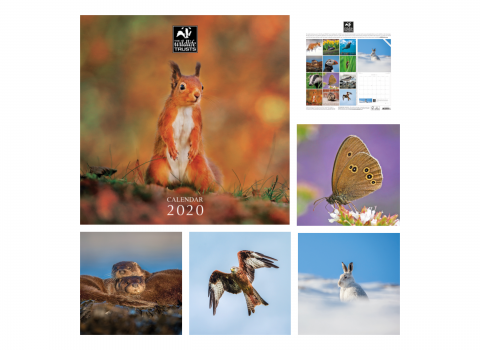 Wildlife Trusts Calendar 2020