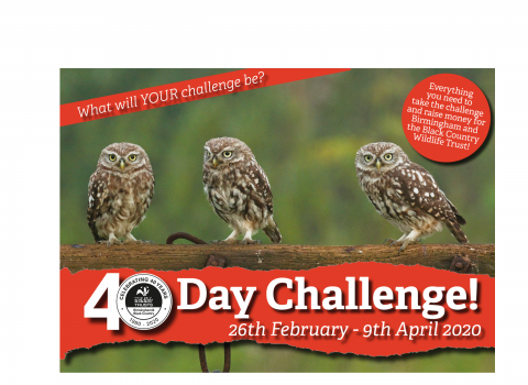 40 Day Challenge